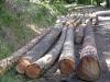 12-logs