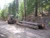 18-backhoe-logging