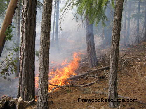 Controlled burns are intentionally set to clean up the forest.