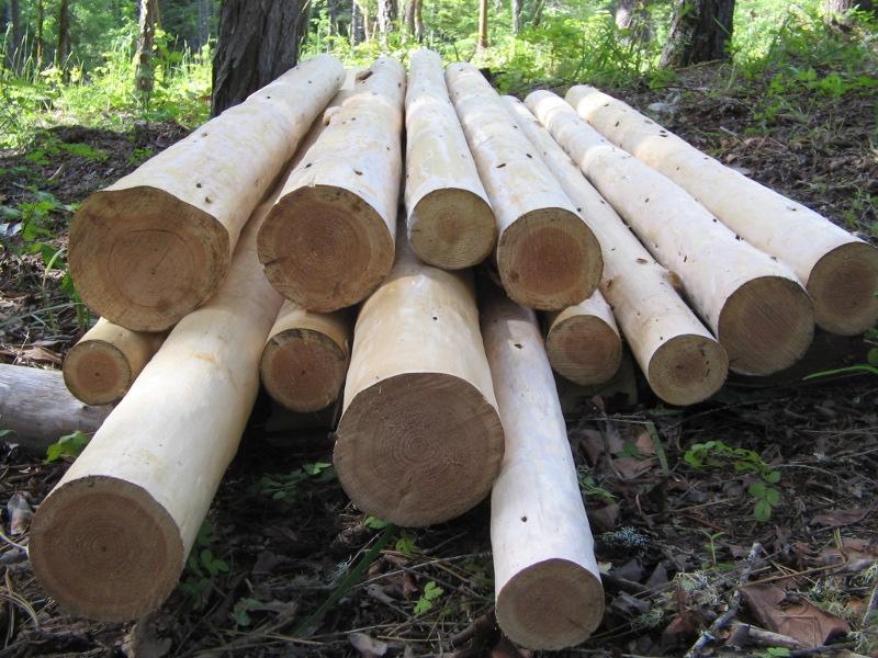 Hand Peeled Logs For Sale Peeled Poles