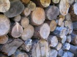 What is the Best Firewood to Burn?