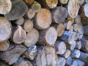 best firewood to burn