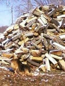 Kentucky Firewood