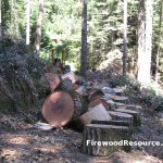 Large Firewood Rounds