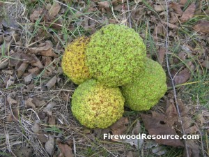 Osage Orange Firewood
